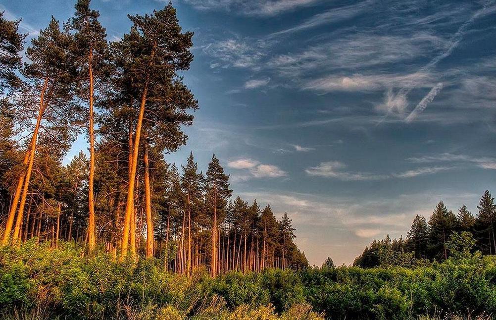 В Тверской области границы памятников природы пришлось устанавливать через суд  - новости Афанасий