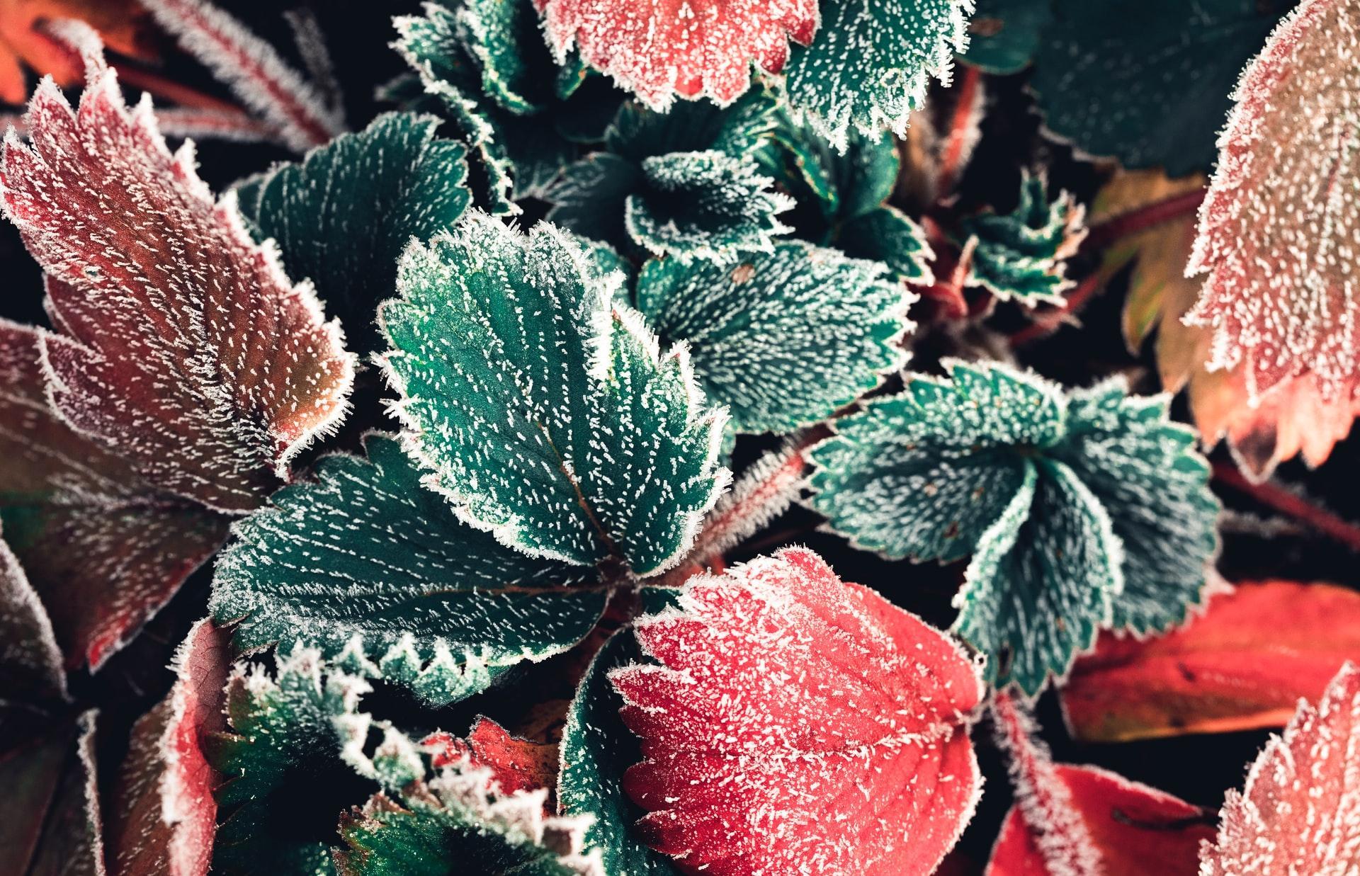 Минусовые температуры возвращаются в Тверскую область