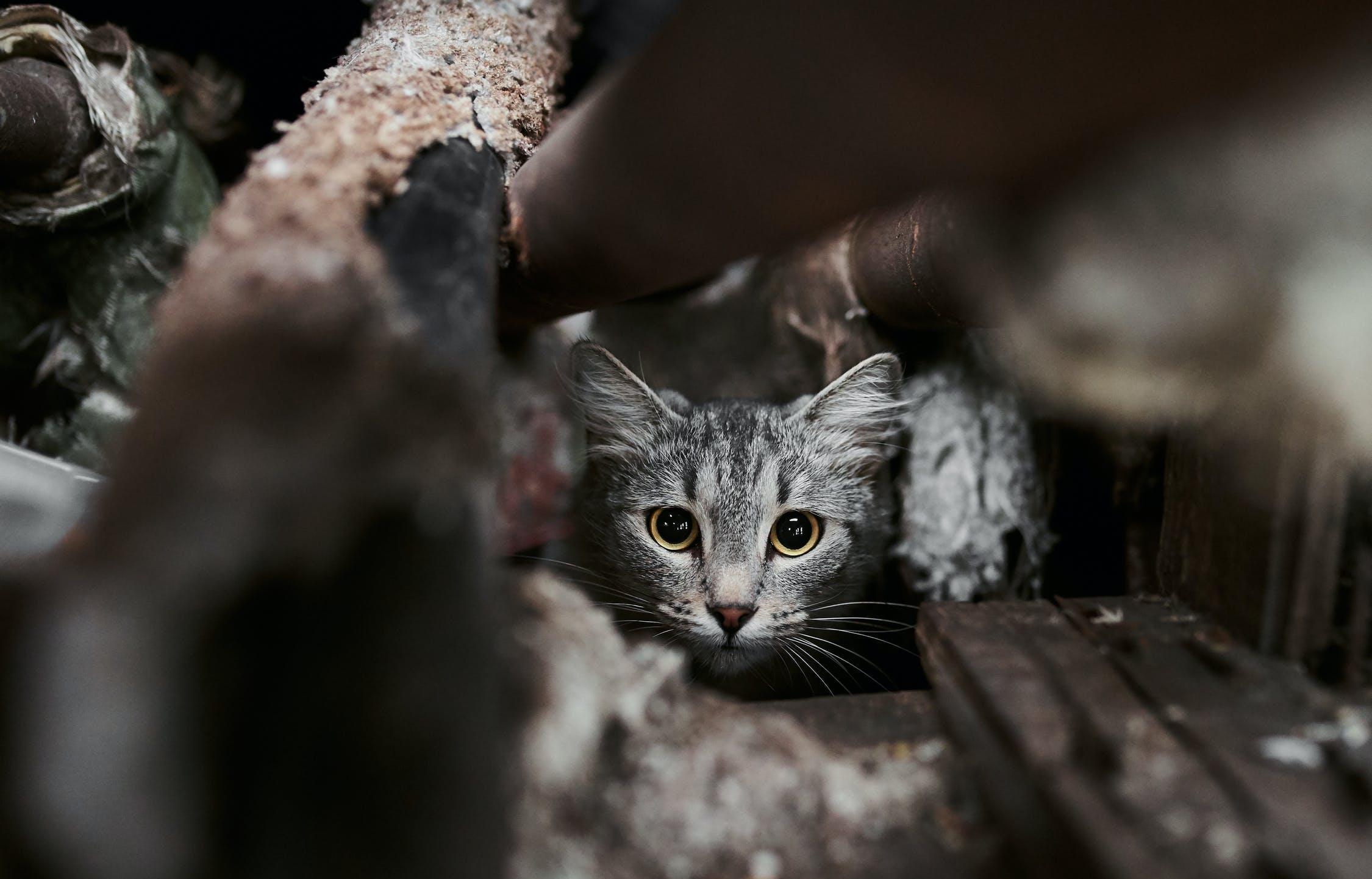 В Твери сыграют «Рок в защиту животных» - новости Афанасий