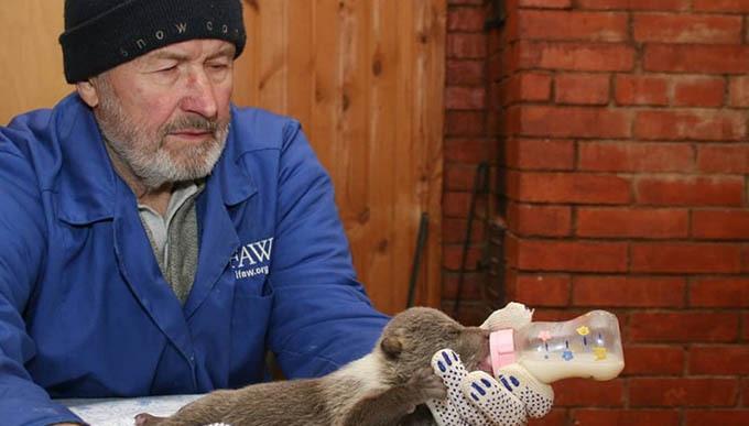 Семь медведей убило током в Тверской области