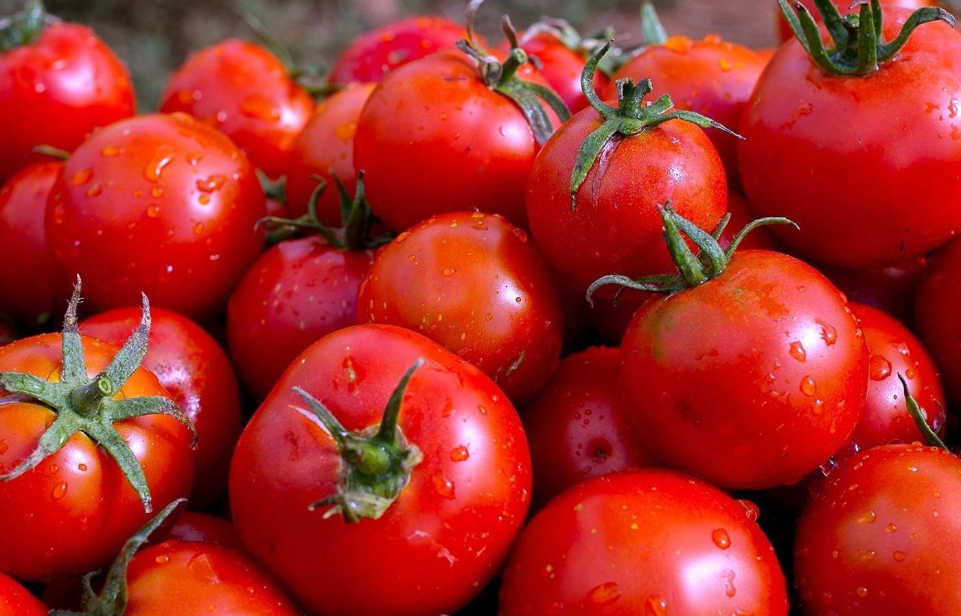 В белорусских томатах нашли вирус мозаики пепино - новости Афанасий