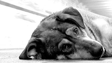 Житель Тверской области, мучивший собаку на глазах у ребенка, приговорен к обязательным работам (18+)
