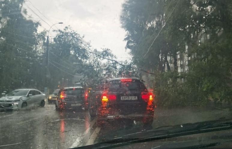 После дождя в Твери повалило деревья и затопило улицы