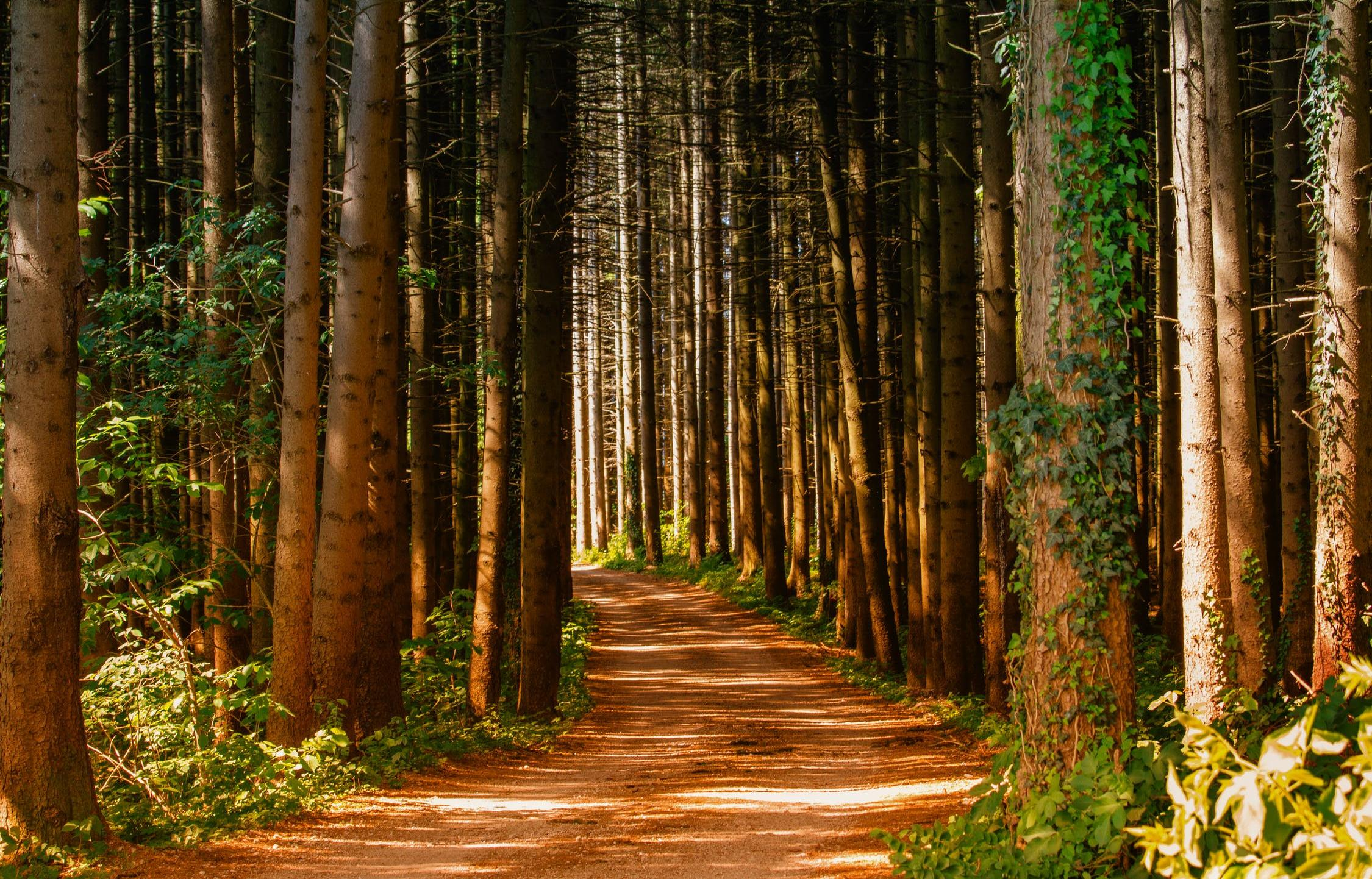 Еще в двух районах Тверской области ограничили посещение лесов - новости Афанасий