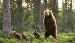 Жителей Твери приглашают на «День рождения медведя»
