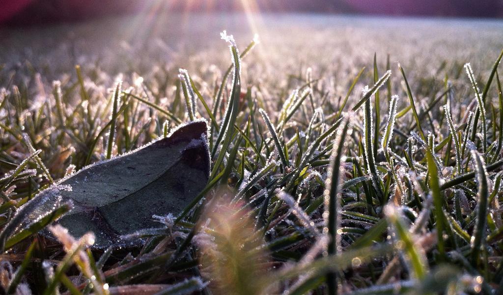 Ночью в Тверской области столбик термометра опустится до -2 градусов