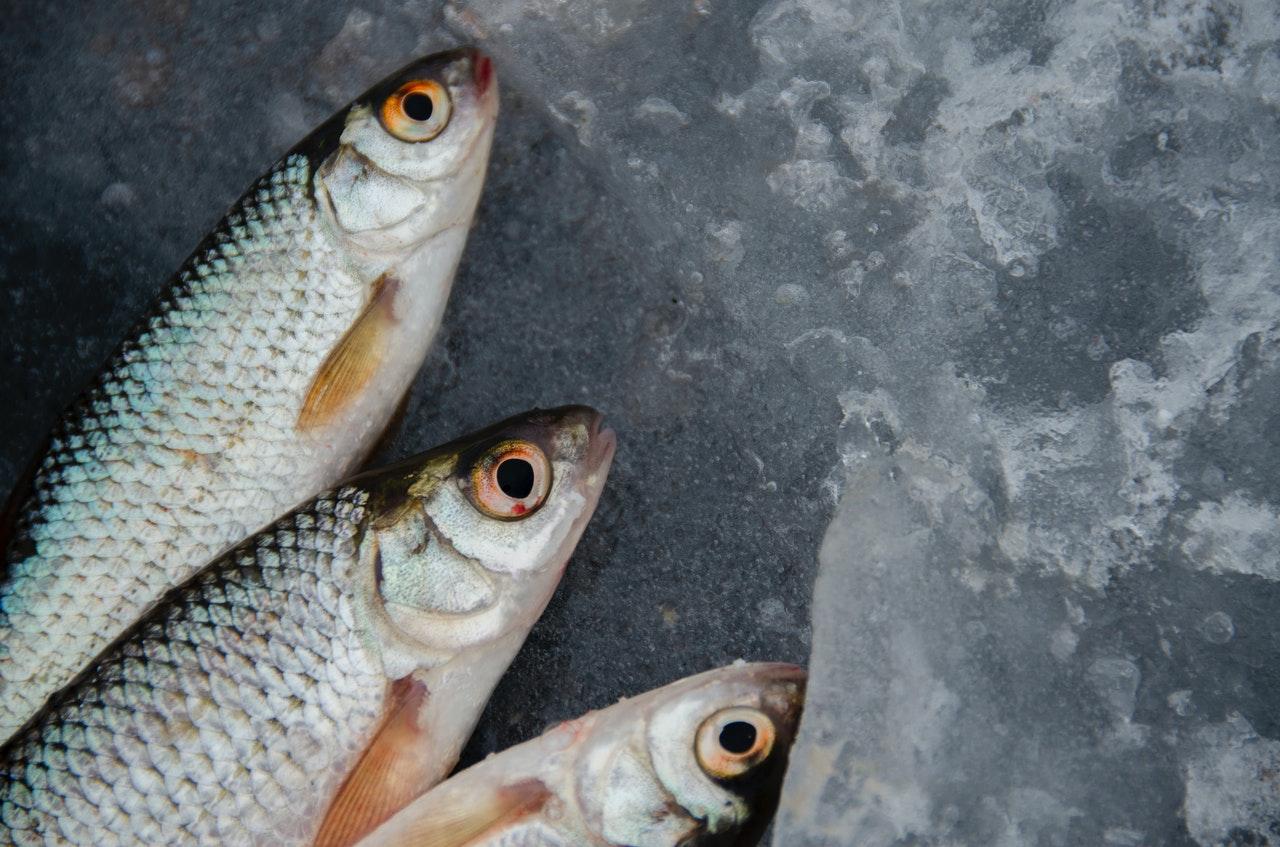 Некачественная рыба выявлена на предприятии аквакультуры в Тверской области