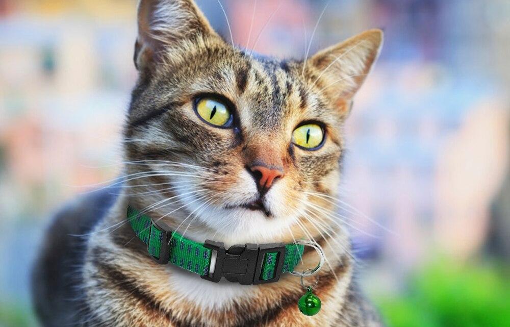 Приостановлена реализация серии лекарственного препарата «Беафар ошейник инсектоакарицидный для кошек» - новости Афанасий