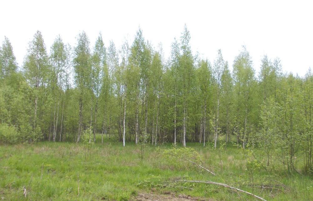 Собственник заросших земельных участков в Оленинском районе получил предостережение - новости Афанасий