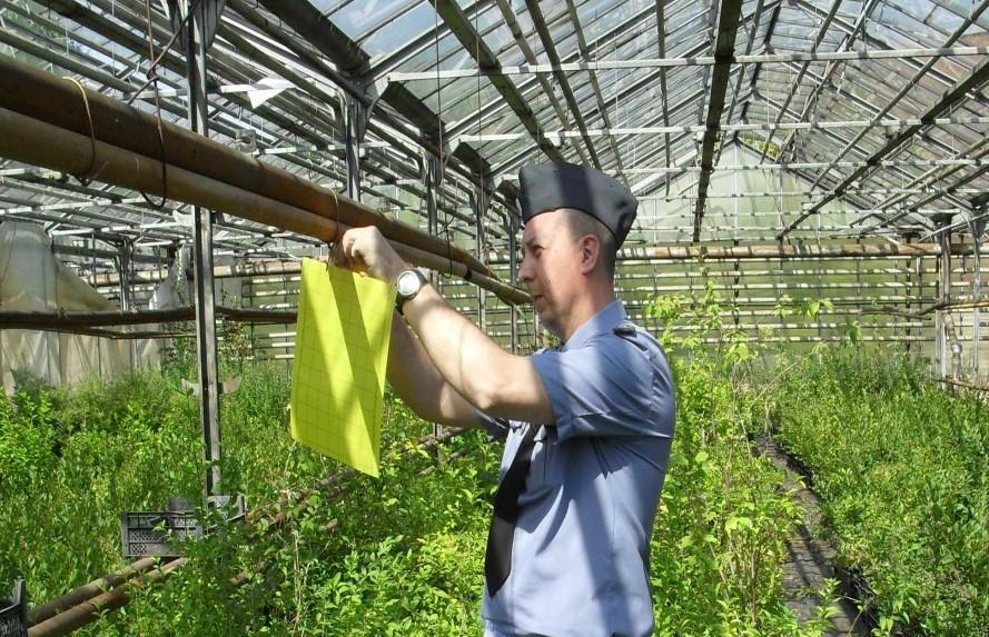 Начался ежегодный мониторинг карантинных насекомых-вредителей на территории региона - новости Афанасий