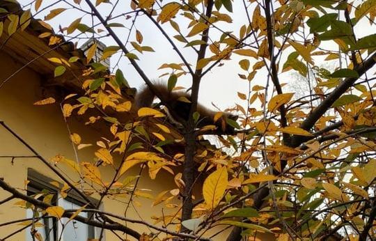 В Бежецке Тверской области по деревьям лазает куница - новости Афанасий