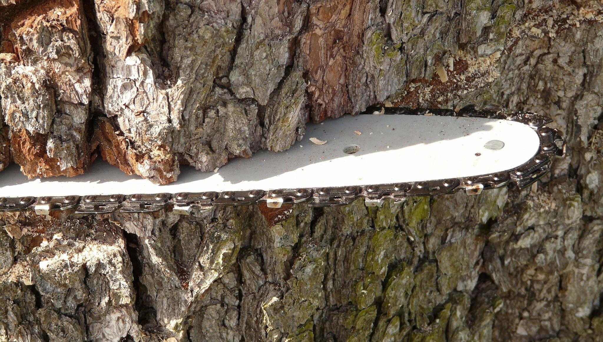 Жителя Тверской области осудили за вырубку 23 деревьев