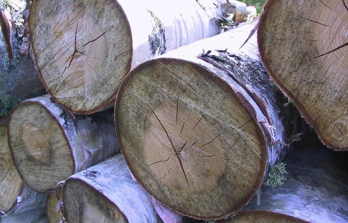 Житель Тверской области получил условный срок за вырубку леса на полмиллиона рублей - новости Афанасий