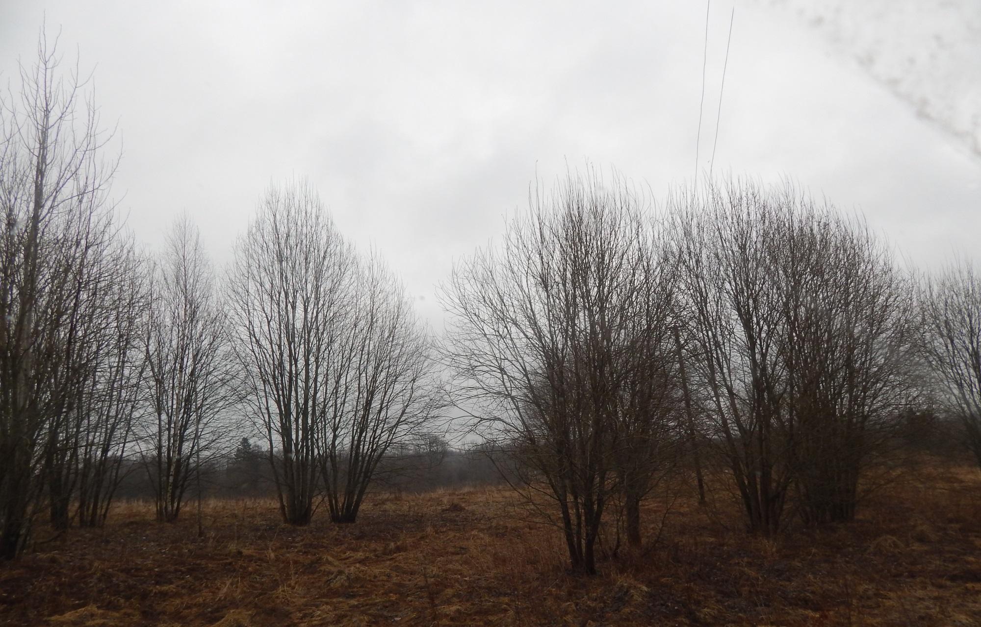 Конаковскому землевладельцу направлено предостережение в связи с зарастанием свыше 100 гектаров сельхозугодий - новости Афанасий