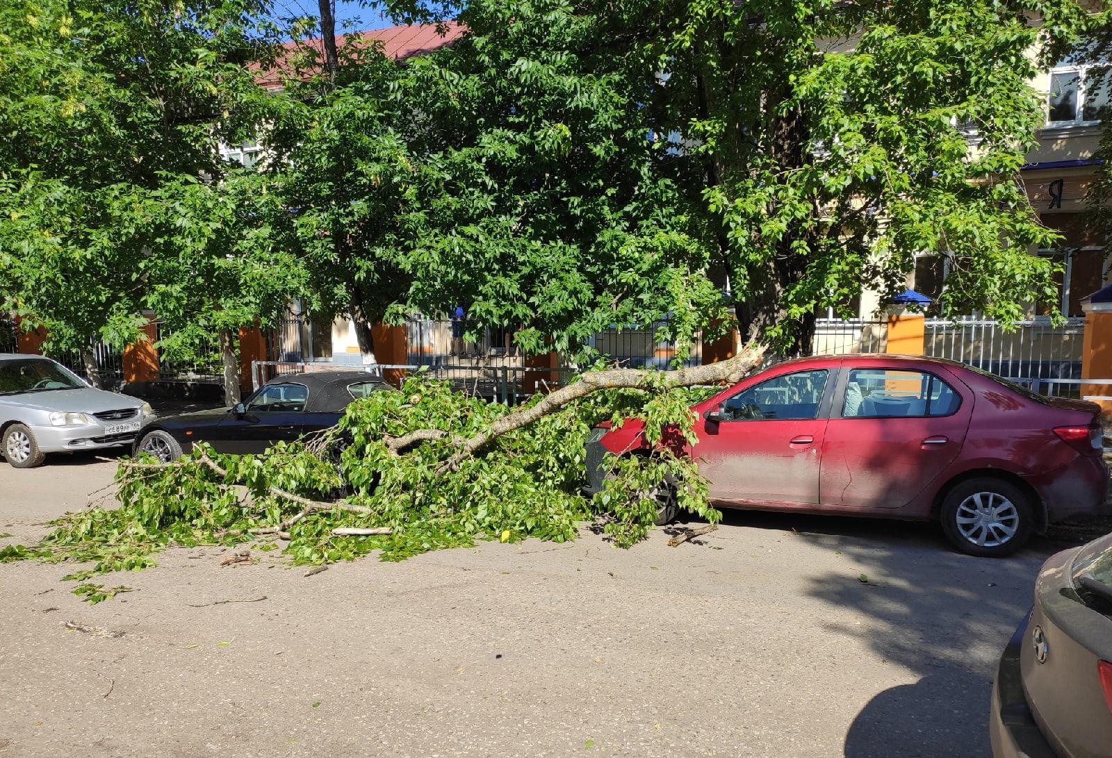 В Твери тяжелая ветка дерева рухнула на припаркованные машины