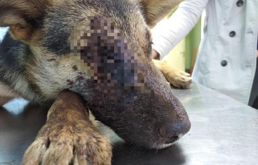 В Твери мужчина расстрелял щенка среди бела дня - новости Афанасий