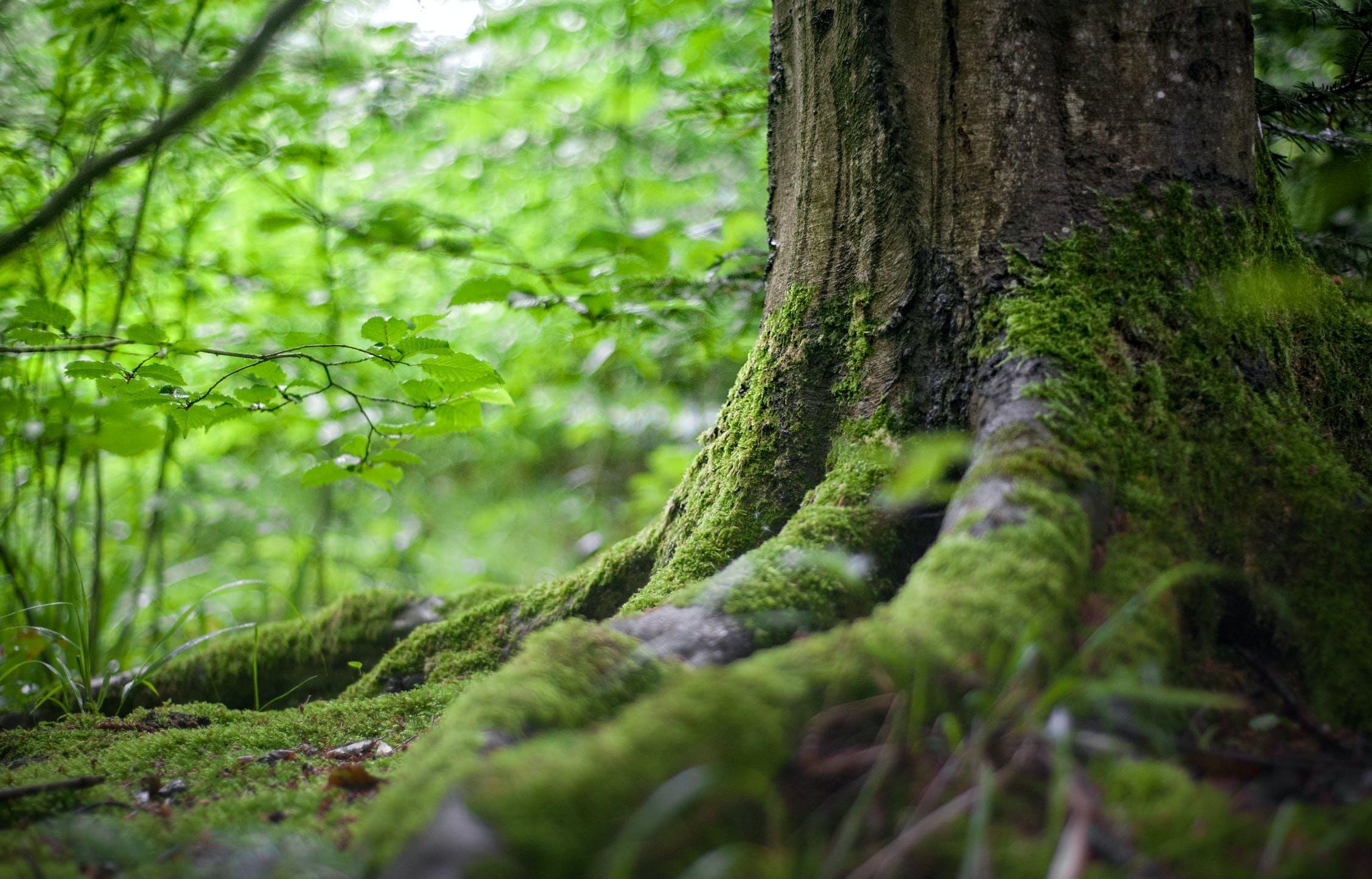 На всей территории Тверской области ограничено посещение лесов - новости Афанасий