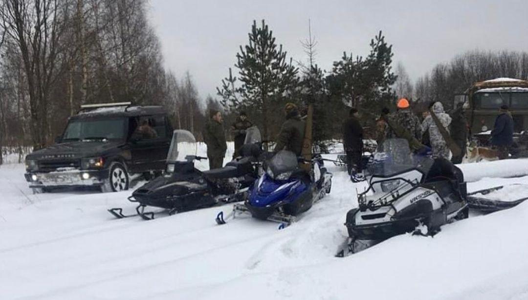 Убийц лосихи из Тверской области могут привлечь к ответственности за жестокое обращение с животными - новости Афанасий