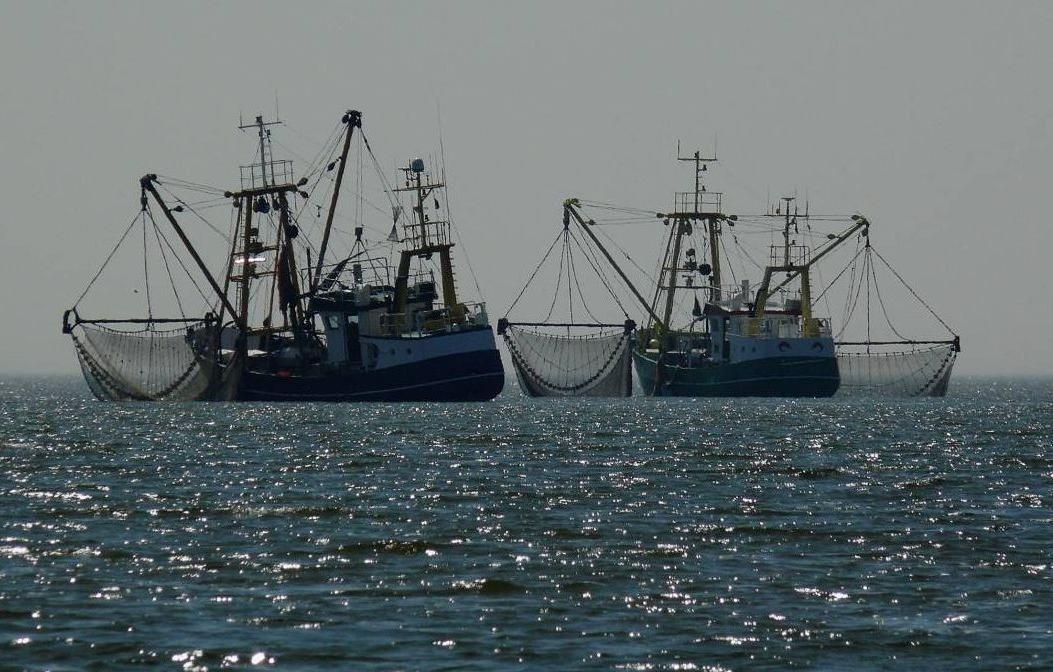 Евросоюз выловил всю рыбу и подорвал экологию