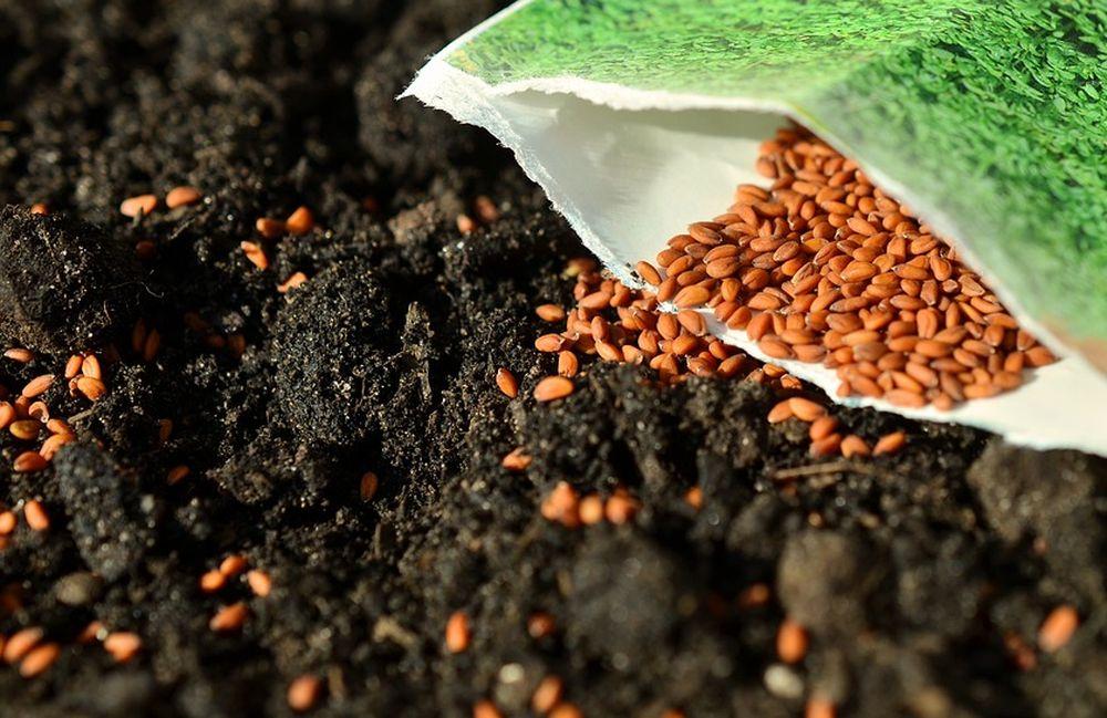 В Тверской области специалисты проверили семена, предназначенные для испытаний селекционных достижений