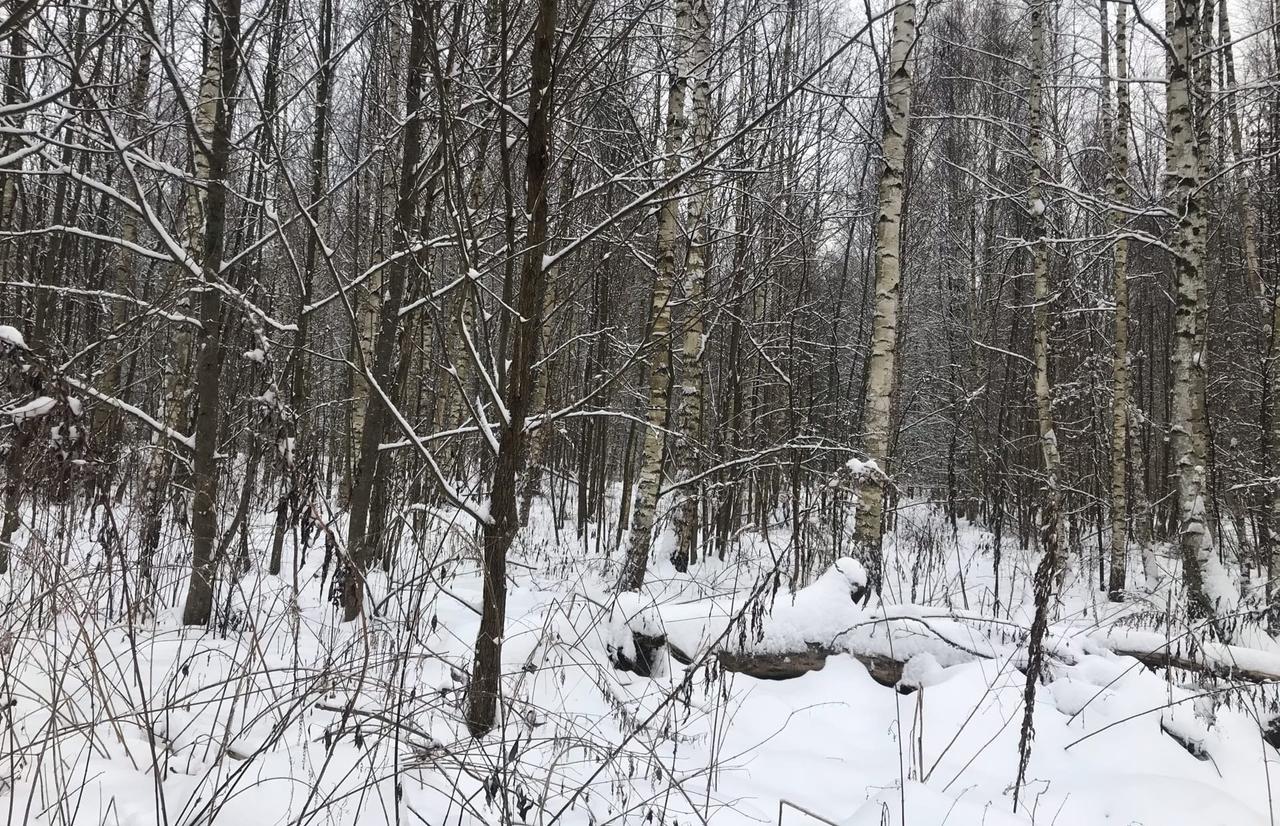 В районе деревни Свистуново Старицкого района зарастает свыше 6 гектаров сельскохозяйственных угодий - новости Афанасий