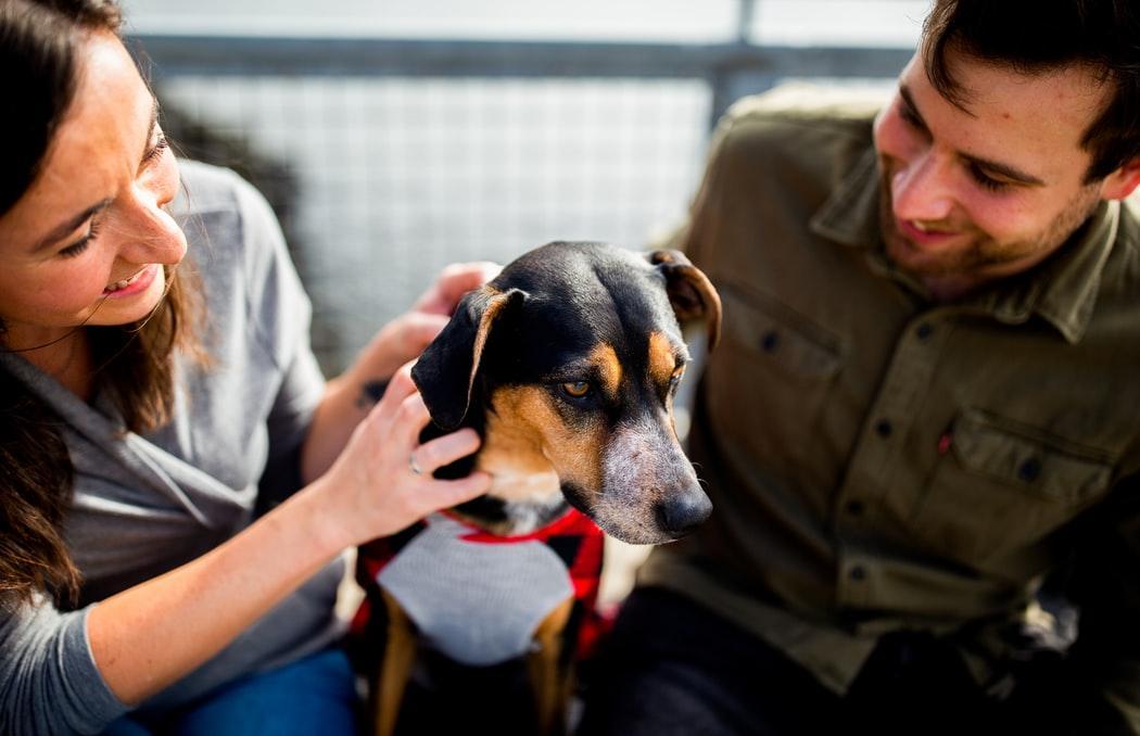 Зоозащитники собирают по 10 рублей на помощь бездомным животным в Твери  - новости Афанасий