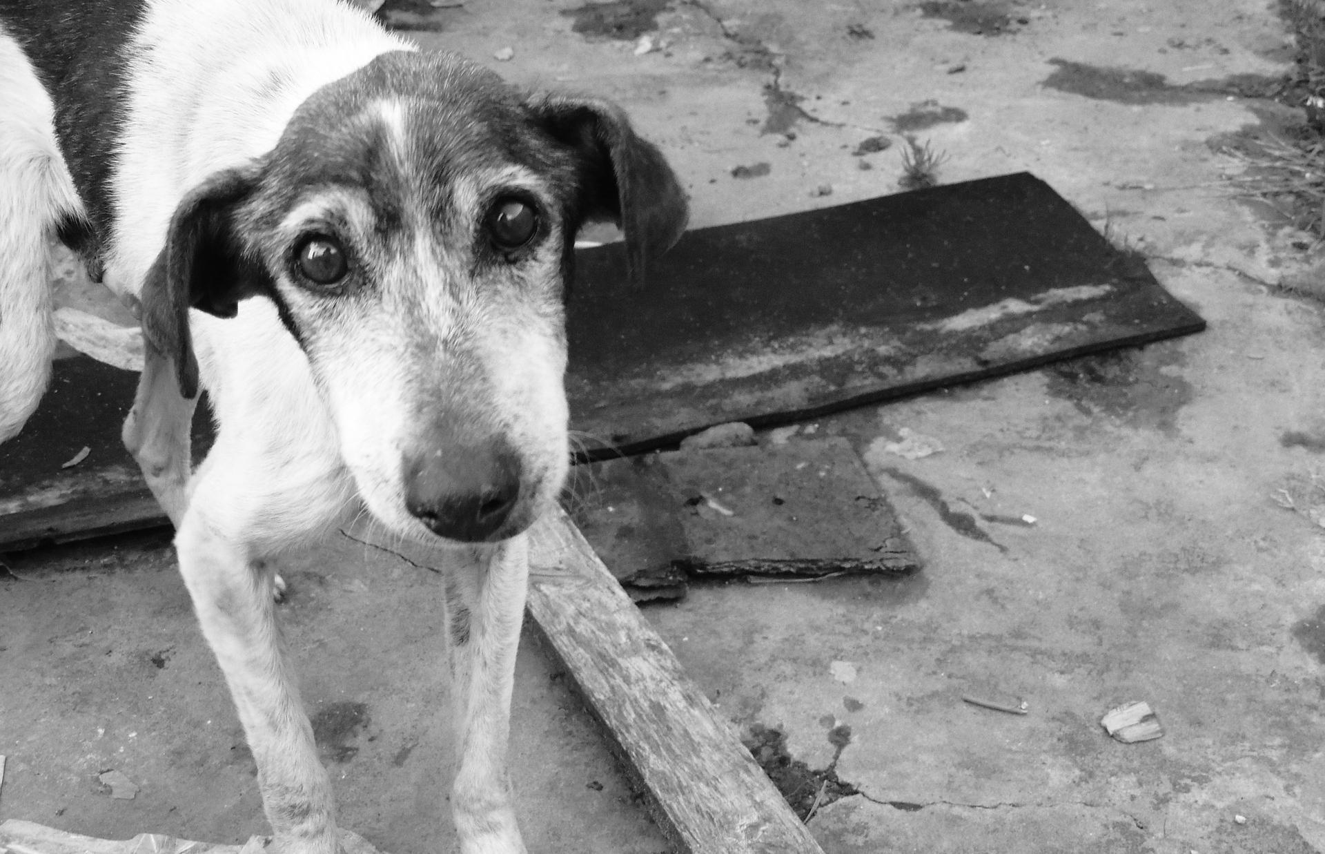 Новый приют на 400 собак появится в Тверской области - новости Афанасий