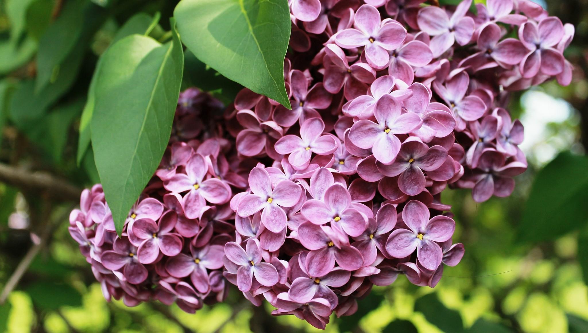 Афиша на 22-23 мая: выставка тверских кладов, праздник тюльпанов и «Сиреневое Домотканово»