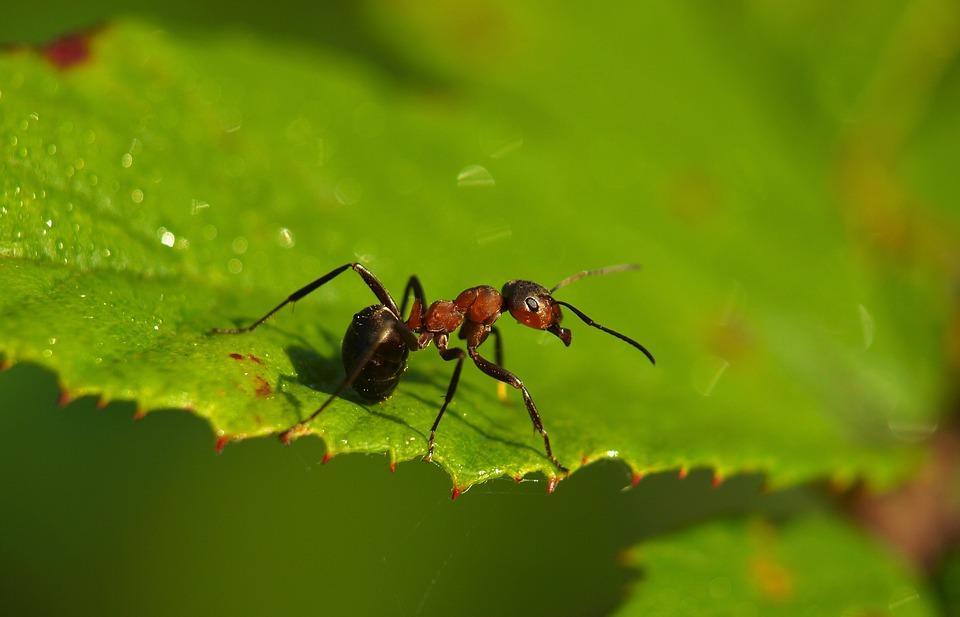 Как избавиться от муравьев на участке, рассказали в Россельхознадзоре - новости Афанасий