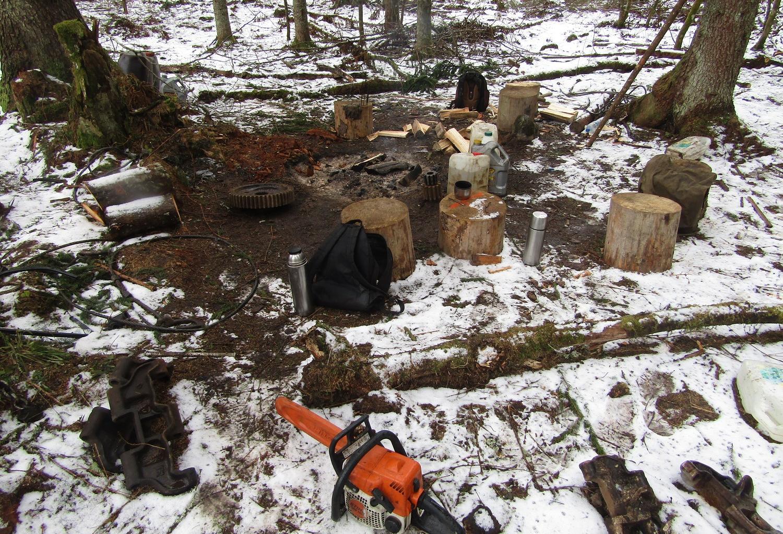 В Тверской области браконьеры вырубили деревья на сумму в 4 млн рублей