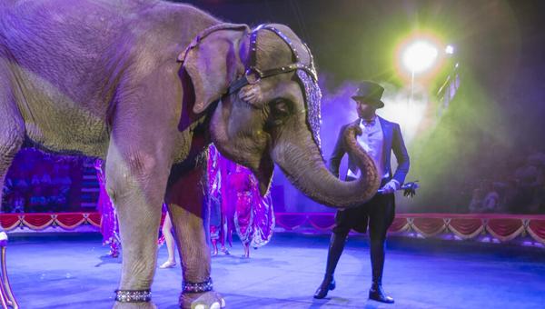 Жители и гости Твери увидят лучшее в мире цирковое шоу со слонами