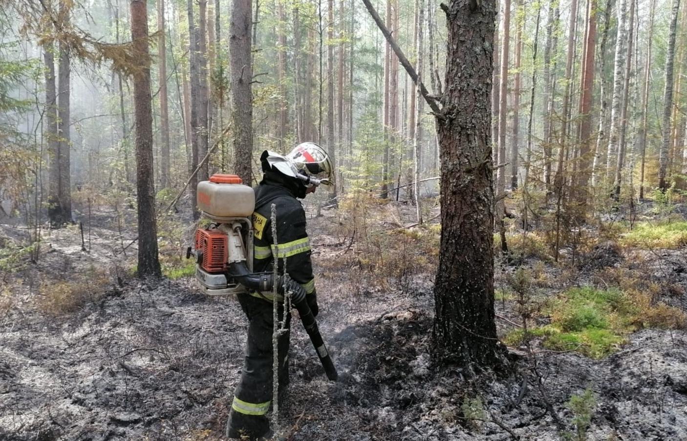 В Тверской области продолжаются природные пожары - новости Афанасий