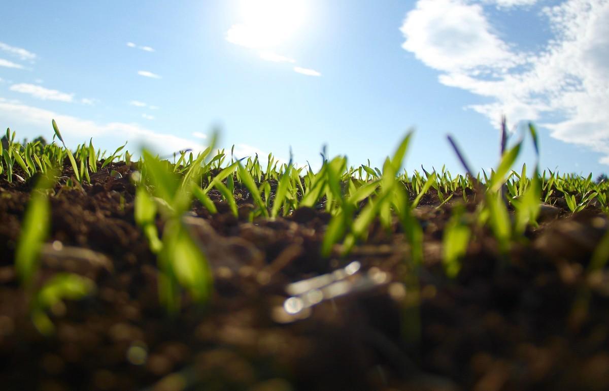 Управление Россельхознадзора проверяет, как в Ярославской области соблюдается земельное законодательство - новости Афанасий