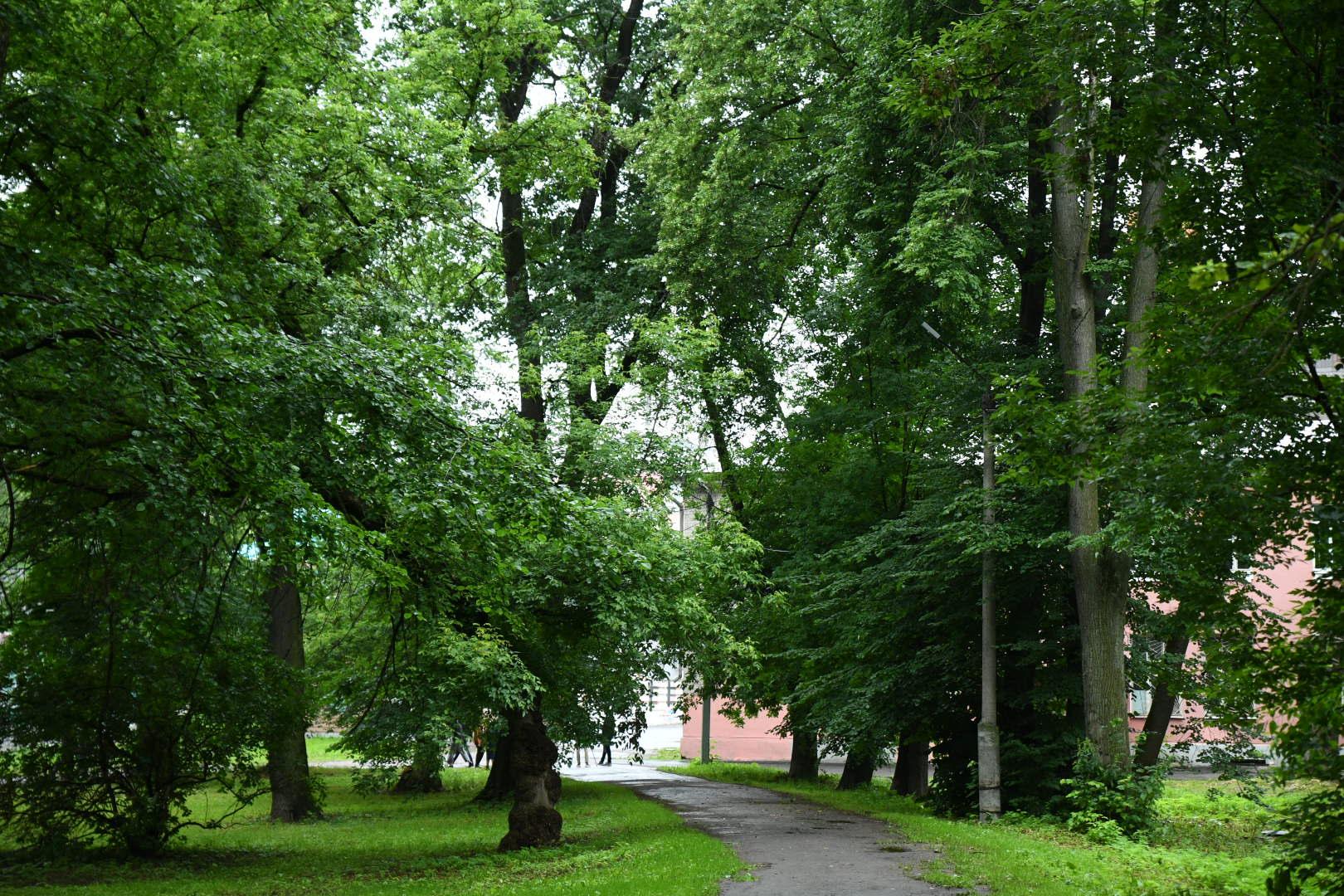 Заброшенный тверской парк «Воксал» планируется вновь сделать местом массового отдыха - новости Афанасий