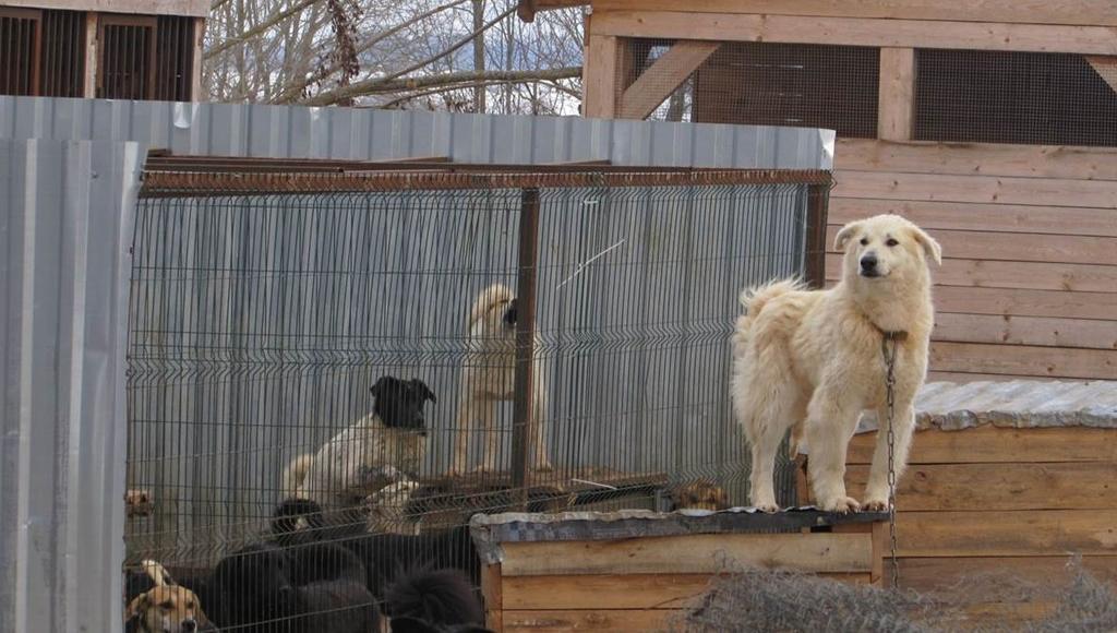 Школьники в Тверской области помогли приюту для животных, собрав тонну корма - новости Афанасий