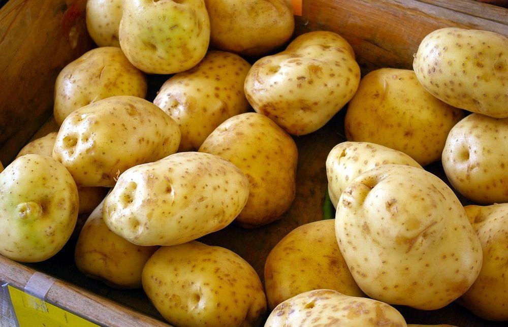 Дачникам рассказали, как выбрать картофель на посадку - новости Афанасий