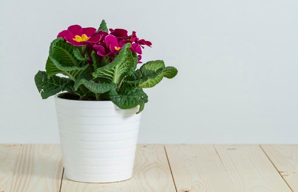 Россельхознадзор назвал опасности при разведении комнатных растений - новости Афанасий