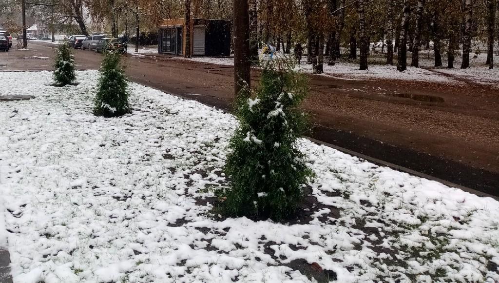 На городской площади в Осташкове Тверской области вновь появились туи