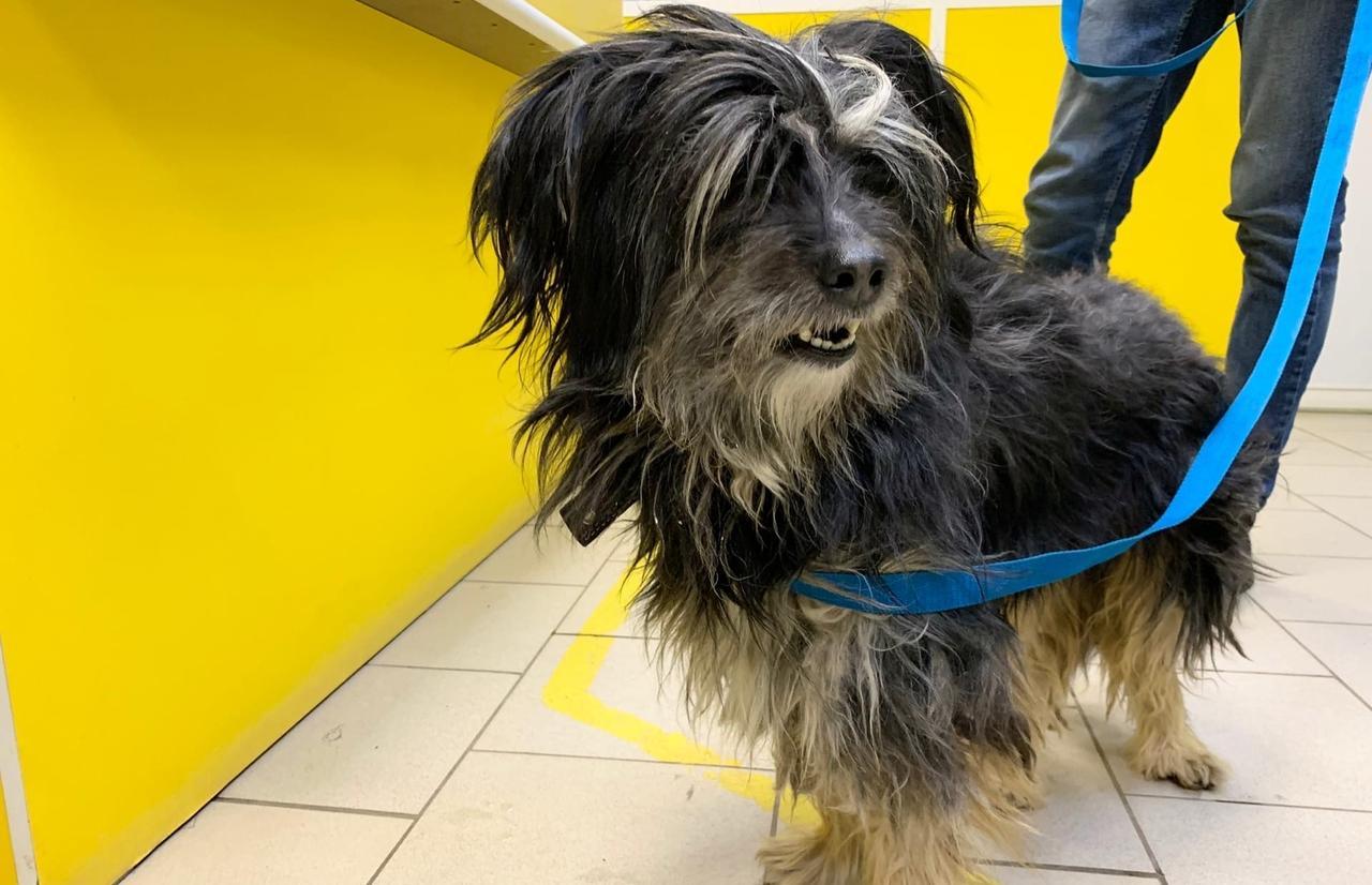Пса, которого спасли из проруби в Твери, забрал министр здравоохранения  - новости Афанасий