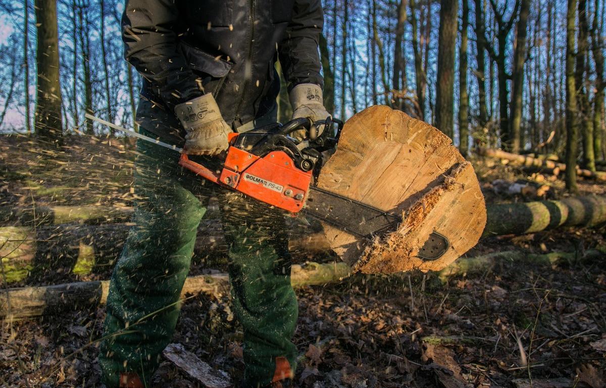 За вывоз спиленного дерева на закрытую свалку оштрафовали МУП в Тверской области - новости Афанасий
