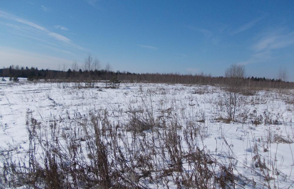 В Калязинском районе длительное время зарастают свыше 45 гектаров сельхозугодий - новости Афанасий