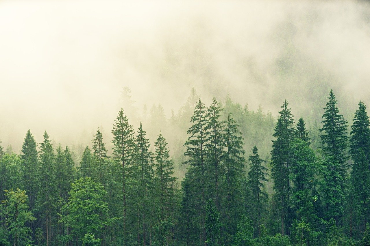 В Тверской области браконьеры вырубили лес на 4 млн рублей - новости Афанасий